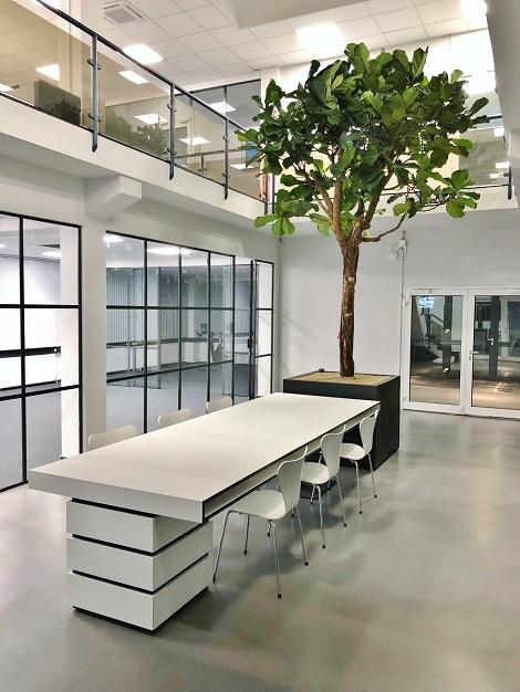 Lyrata Baum Innenraumbegruenung kaufen