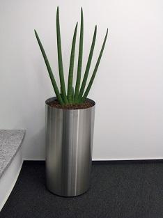 innenraumbegruenung konferenzraum Sanseveria cylindrica edelstahl pflanzgefaess wuerzburg