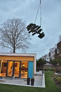 Pinus_mit_kran_dänemark_denmark_gepflanzt