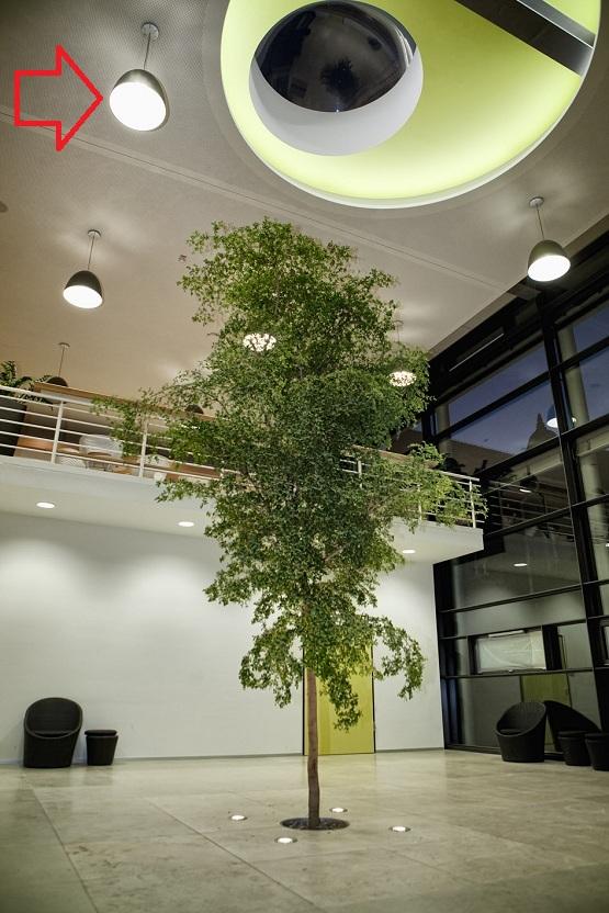 pflanzenlicht grosspflanzen innenraum botanic international com