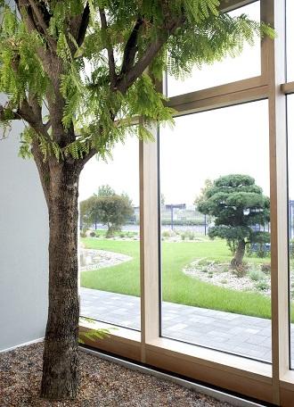 innenraumbegrünung mit tamarindenbaum bei leipzig