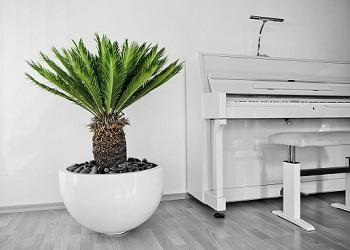 innenraumbegruenung mit palmfarn in fiberstone privat