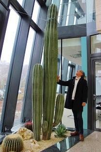 innenraumbegruenung sauelenkaktus pachycereus-4m hessen atrium
