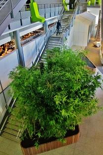 bambou-tropical-plantes-interieur-acheter-en-ligne