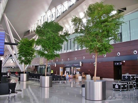 Arbres Bucida tropicaux dans la salle aeroport