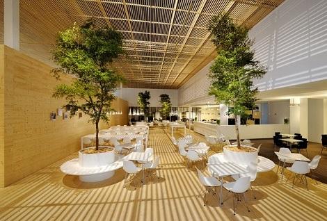 Arbres Bucida tropicaux dans la salle exposition