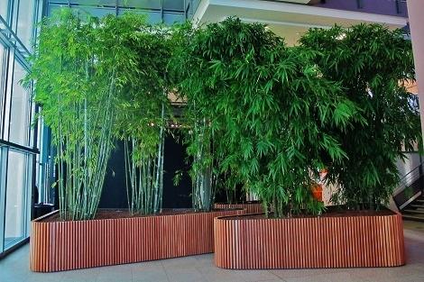 Plantes hall et grands espaces for Acheter plantes en ligne