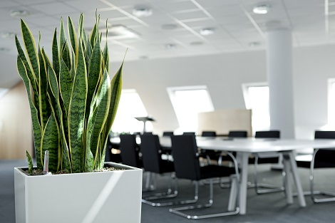 Salles-de-conferences/plants_verts_dans_les_sall_conference_acheter_en_ligne