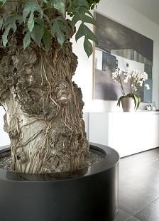 planters_modernes_achter_en_ligne-avec-plantes