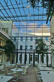 Creation-de-espaces-verts-interieurs-bucida-buceras-shady-lady